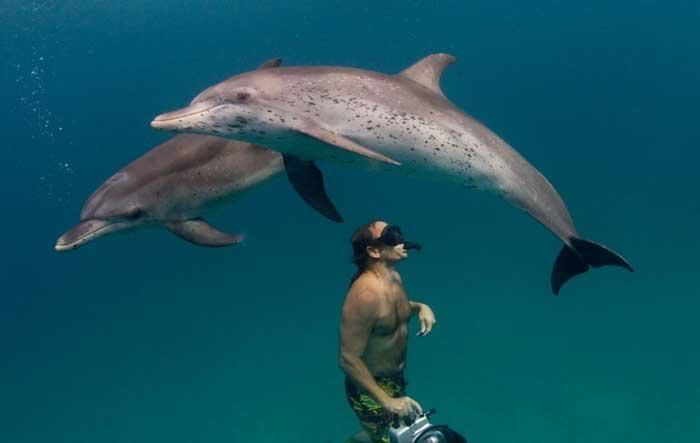 Nager avec les dauphins, toucher un serpent, etc... Réaliser le rêve d'enfant des mariés !